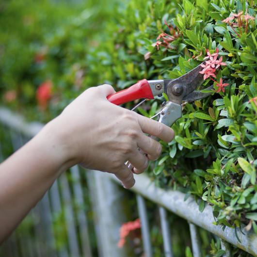 Pflege von Grün und Freiflächen